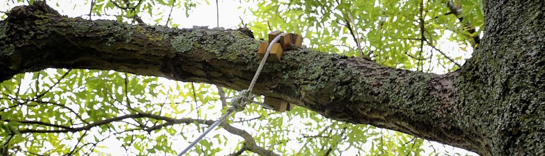 cable-arbre-ecobane