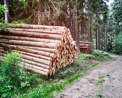 Ecobane cabane bois scierie france