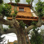 une cabane dans un arbres à Salon de Provence