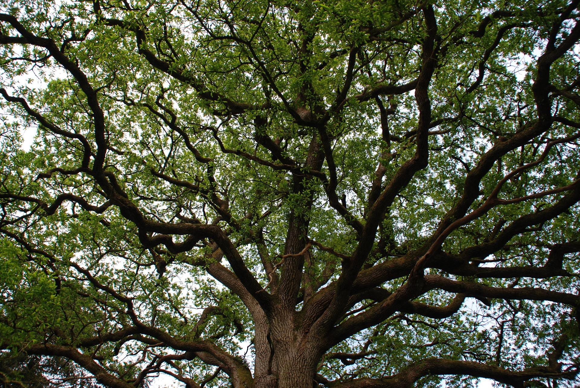 arbre de la forêt de Broceliandre en Bretagne