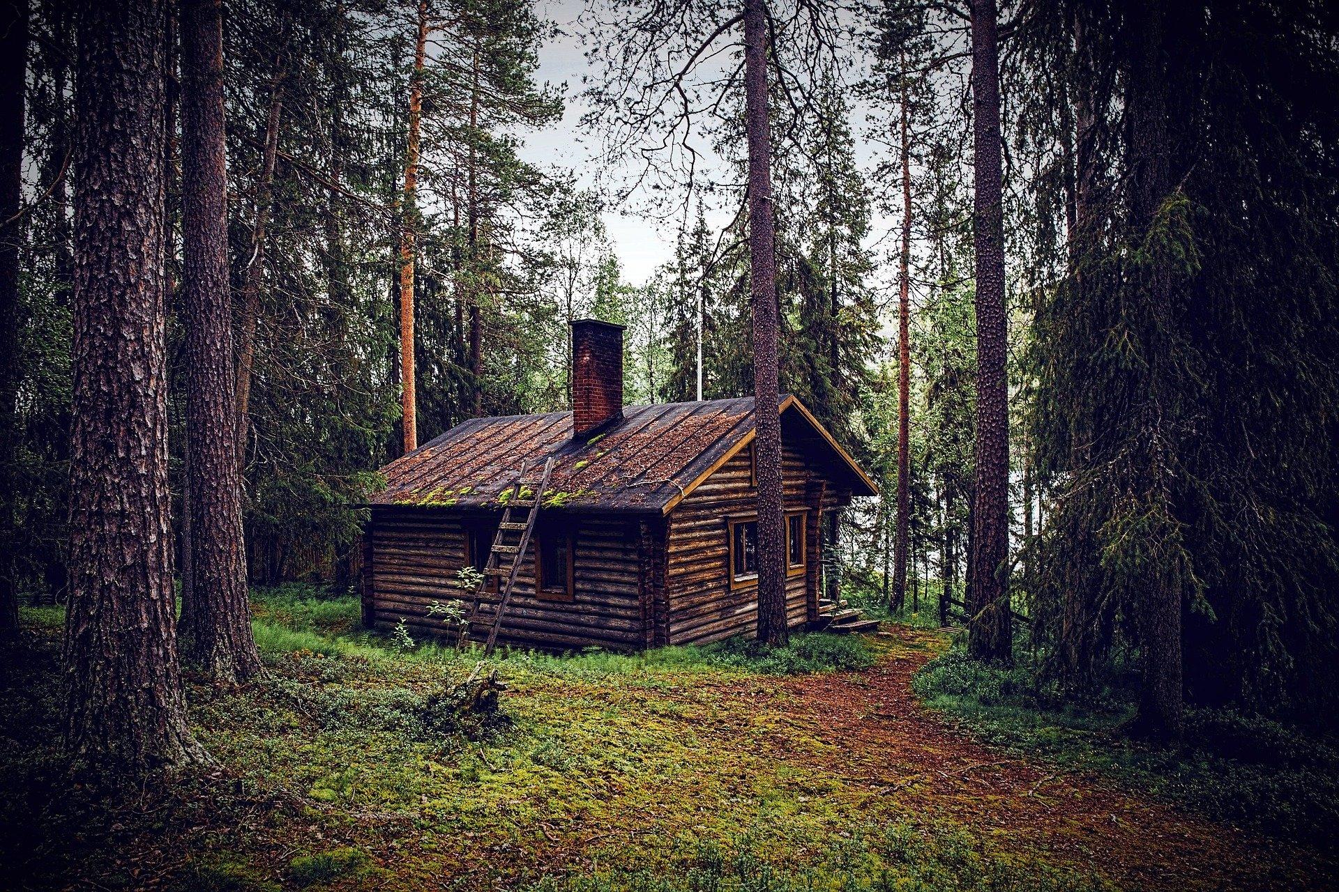 cabane bois en foret