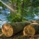origine de nos bois - ecobane