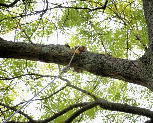 câble de maintien pour une cabane dans un arbre