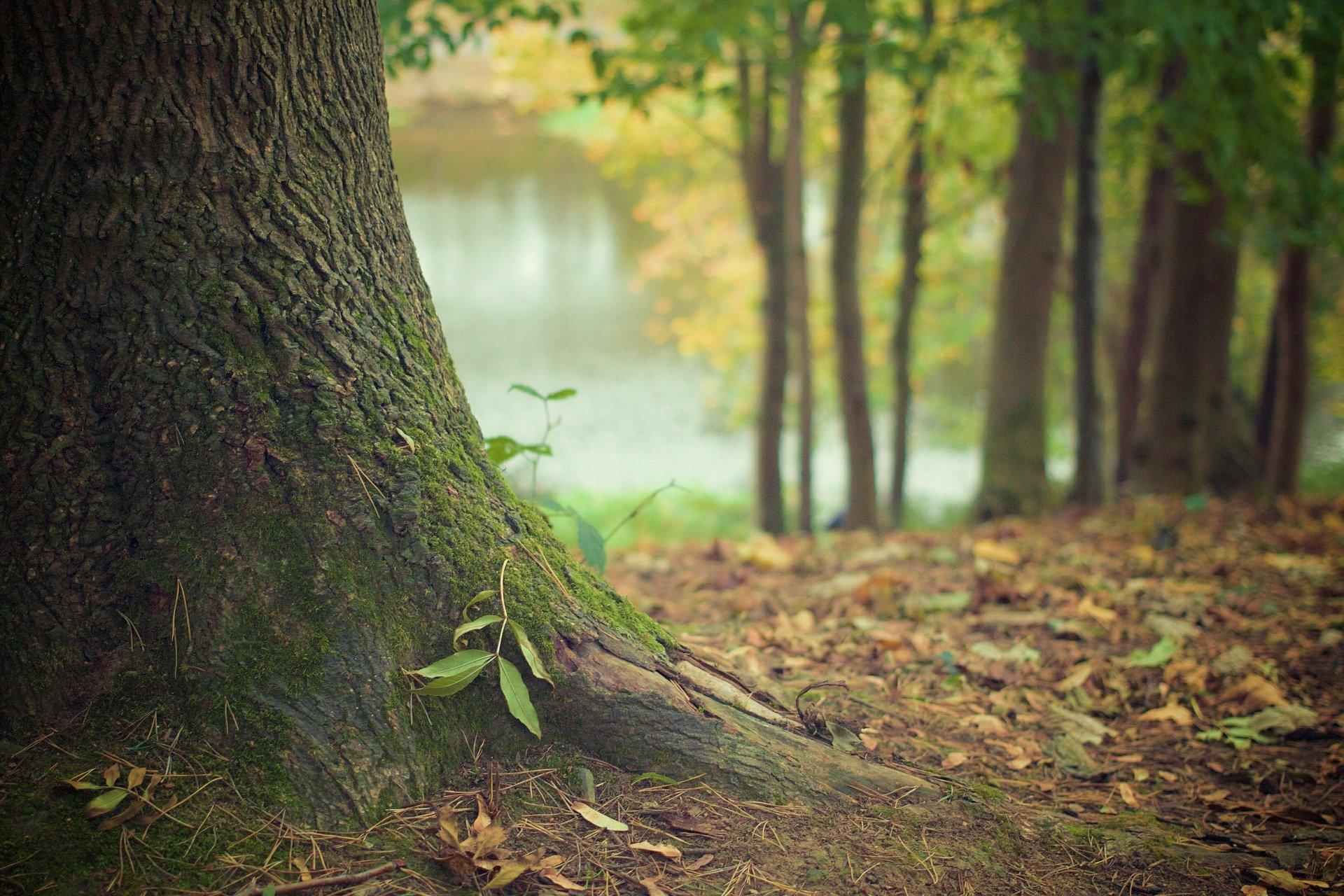 Racine d'arbre, étude phytosanitaire
