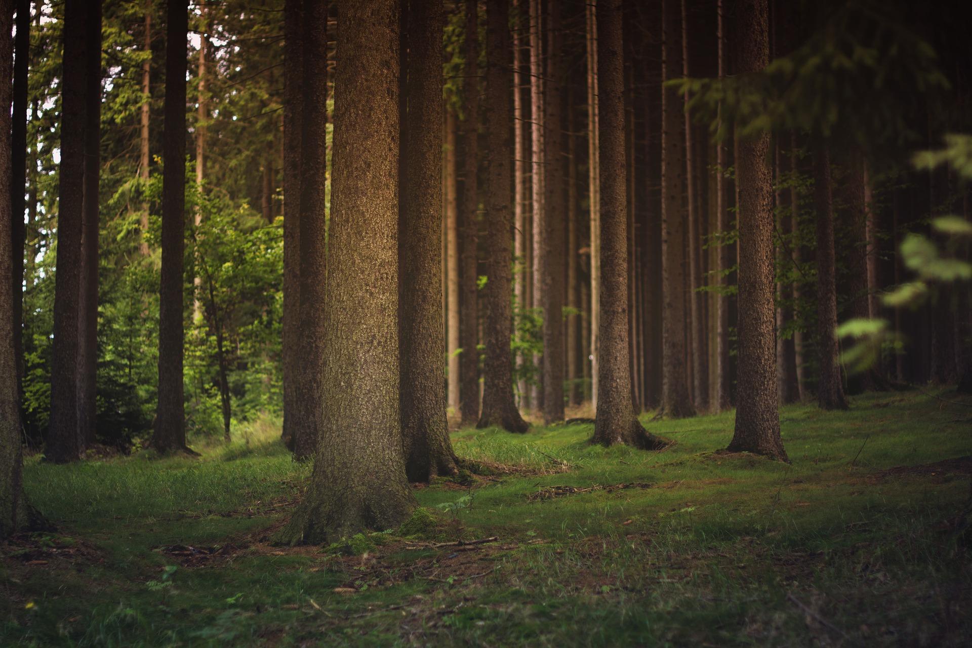 Etude phytosanitaire d'un arbre - troncs